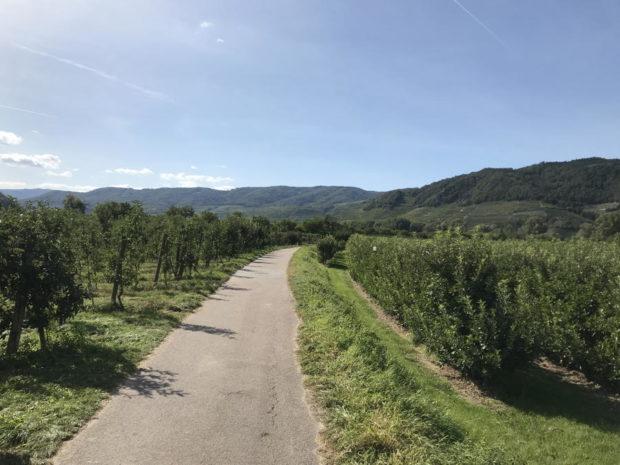 Weg im Weinviertel