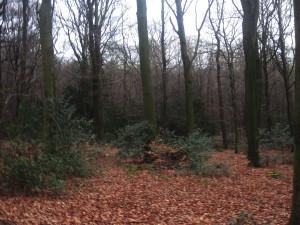 Immergrünes Unterholz