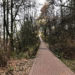 Geklinkterter Waldweg