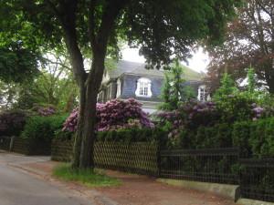 villa_waldesruh_bluehender_rhododendron